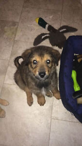 Paws for Love dog rescue has a 10 week mix breed  for adoption
