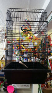 Ziggy's Feathered Friends - Birds, Cages, Supplies London Ontario image 4