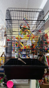 Ziggy's Feathered Friends - Birds, Cages, Supplies London Ontario image 5