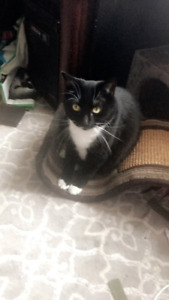Female Cat to rehome