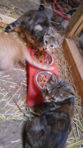 Free 4 month old Barn cats