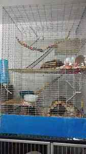 rat cage or other small animal