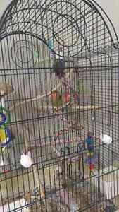 Pair of Love birds--> Need gone ASAP