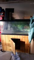 Aquarium 33 gallon with Wood  Stand