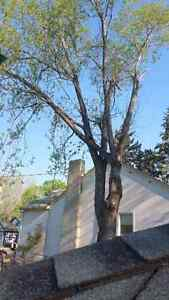 Black Out Tree Removal Edmonton Edmonton Area image 4