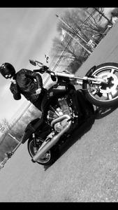 Harley Vrod Muscle 2013 noir  lustré A1