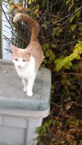 ** Found ** Young Male Cat   Riverheights **Is he yours?**