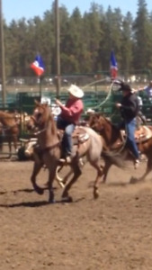 Ranch/Rope horse