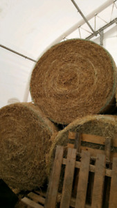 Horse quality round hay bales