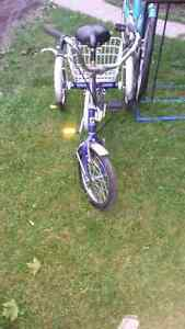 12 inch  genisis youth or adult  trike  Sarnia Sarnia Area image 3