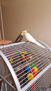 I am Salling all my lovely Birds because of   moving