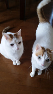 Looking to Re-Home 2 Loveable Male Cats