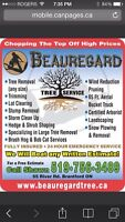 Tree Removal/ stump removal/ storm damage cleanup