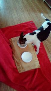 DOG FEEDING STATION (small breed dogs)