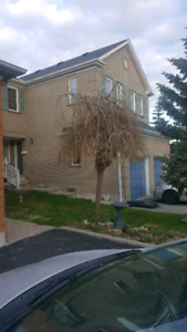 Free weeping mulberry tree