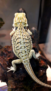 Sale pricing - male holdbacks! $250 each 3 available!