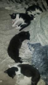 4 gorgeous kittens