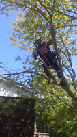 T MAC TREE CARE & REMOVAL
