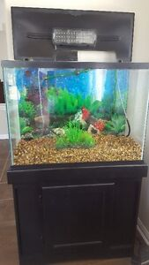 Fish Tank and all accessories for sale