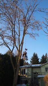 PROFESSIONAL TREE SERVICES/ALL SEASON TREE SPECIALISTS Cambridge Kitchener Area image 1
