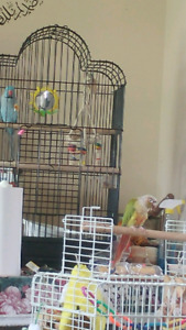 Birds parrot pet rabbit sitter from home $10/day ! avaiable 24/7