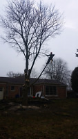 Professional Tree and Stump Removal Affordable Prices