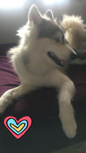 Selling our Husky