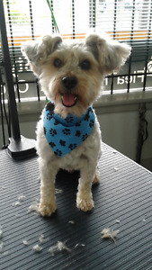 Dog Grooming - Thorndale Area