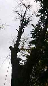 Lumbersmith Tree Removal Services Inc Cambridge Kitchener Area image 5