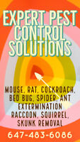 GUARANTEED MOUSE, RAT, BUG, INSECT EXTERMINATION. PEST CONTROL