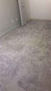Newer carpet in great condition