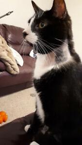 LOST CAT: PETERBOROUGH ON