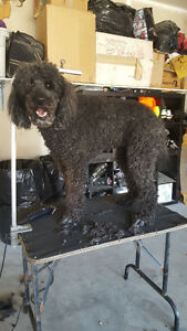 Mobile Pet Grooming Services In The Comfort Of Your Own Home Edmonton Edmonton Area image 2