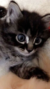 Adorable kitten with a special conditions