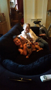 Almost 7 month old Shar pei/ jack russel fully house trained