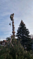United Tree Service-Removals/Pruning/Deadwooding/Stump Grinding