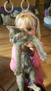 Two very well loved kittens for sale!