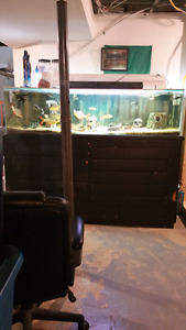 Complete fish tank, filters and fish