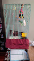 Love bird and large cage