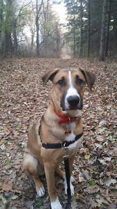 New Dog Walker - Third Ave Area