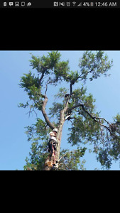 INSURED CERTIFIED LOCAL TREE SERVICES AVAILABLE CALL NOW