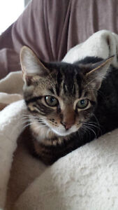 Magnifique chaton à donner