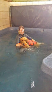 Canine Hydrotherapy at Pet-D-Gree Cambridge Kitchener Area image 2
