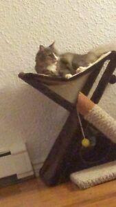 Cat scratcher / lounger