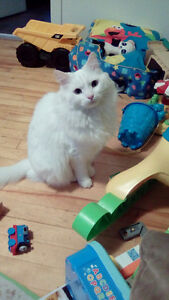 Two Beautiful Male Cats Need A Loving Home MUST Go Together