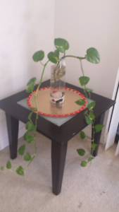 Money Plant With Ikea Jar