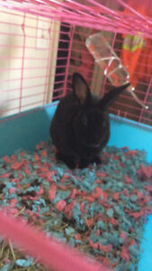 pet rabbit for rehoming