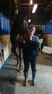 7 year old TB Mare for sale/trade