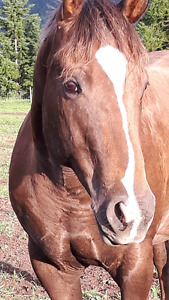 HORSES FOR SALE  $500.00 & UP