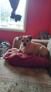 Small Spayed female Dog looking for Adult Lady